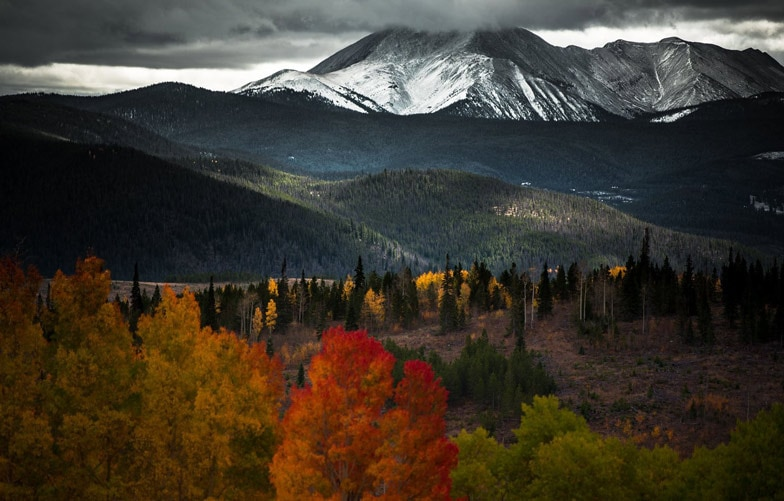 Silverthorne Co Nature Inspired Color Palettes